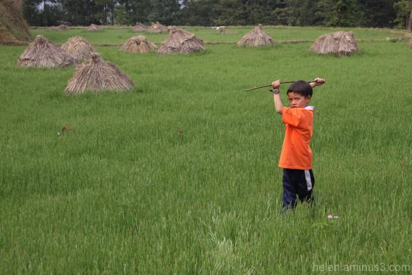 Rice paddy superhero