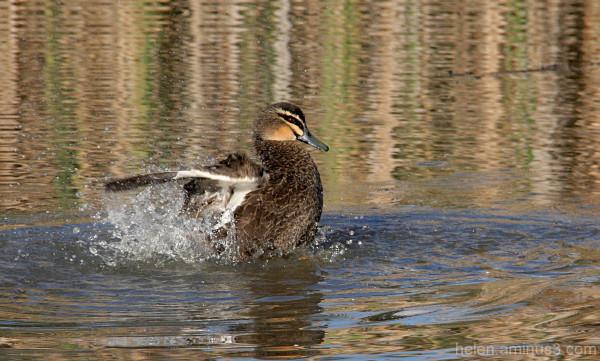 Splish, splash ... I'm takin' a bath ....