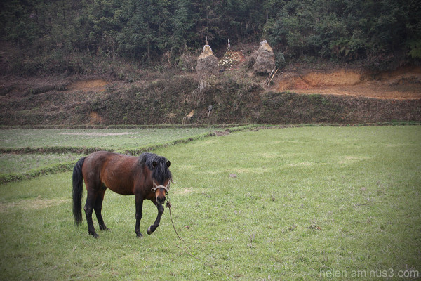 ...of horses and haystacks