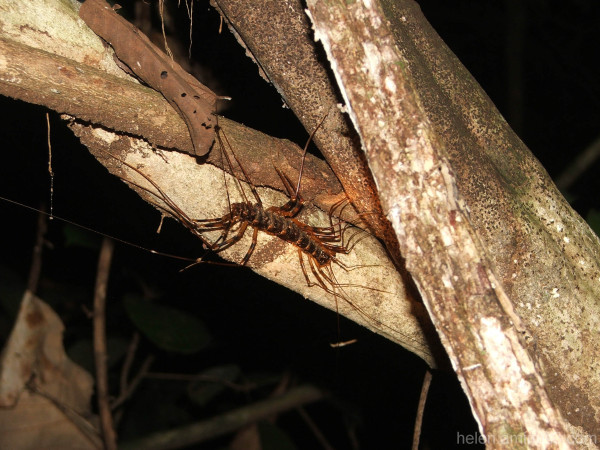 Night jungle trek:  Borneo 1