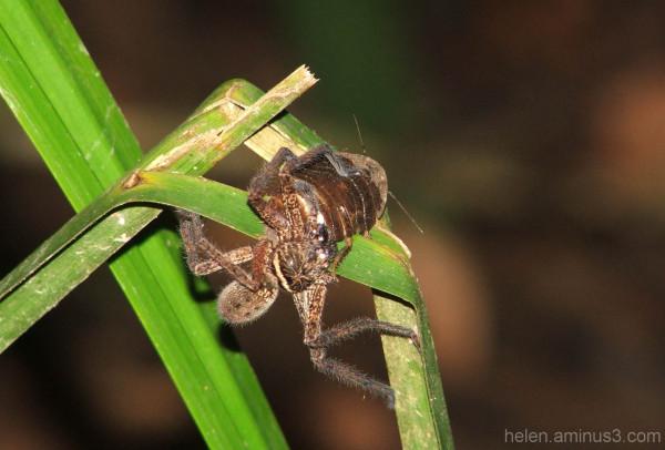 Night jungle trek:  Borneo 2