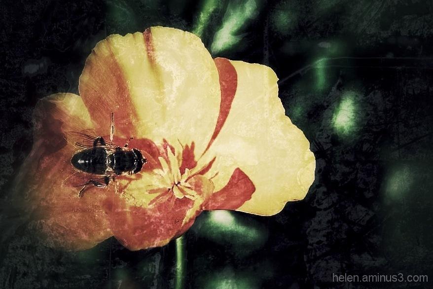 A bee in a bonnet