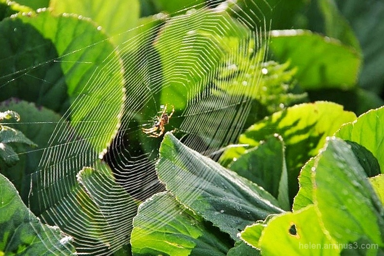 Beauty in web