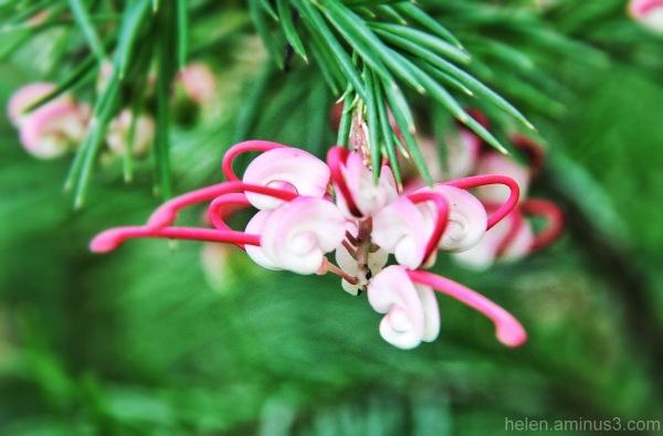 Shy bloom