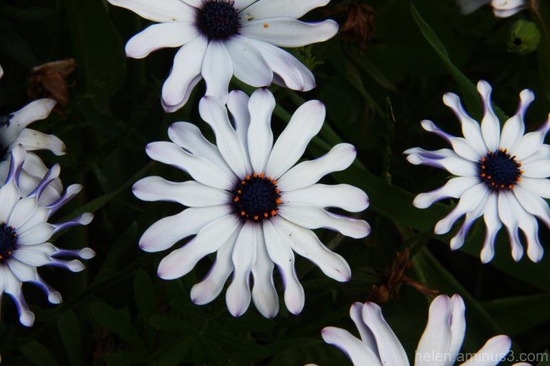Cogs in Nature's wheel