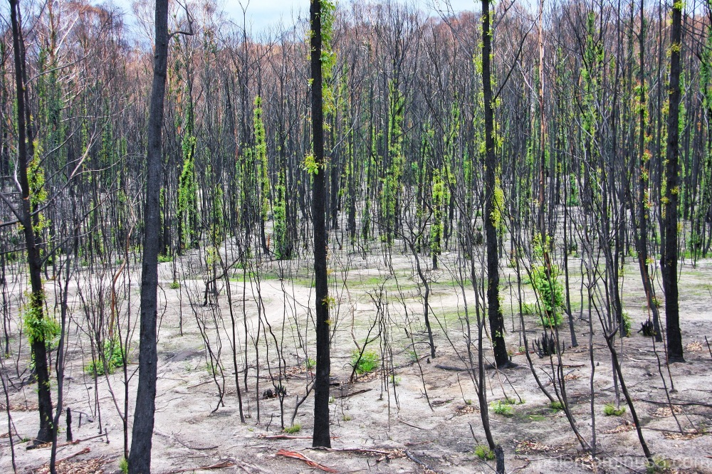 Burnt trees and scorched earth