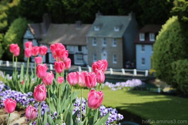 ... in an English country garden 4