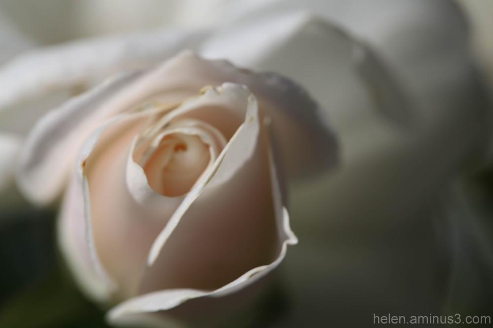 Secret bloom