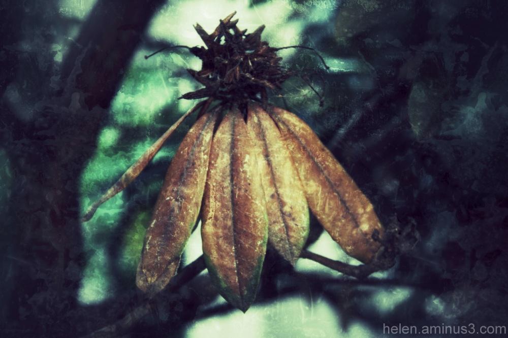 Drooping bloom