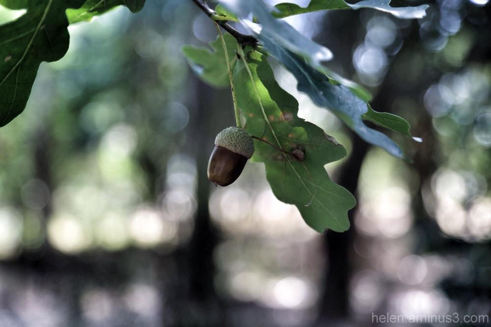 Hanging around in the oak grove