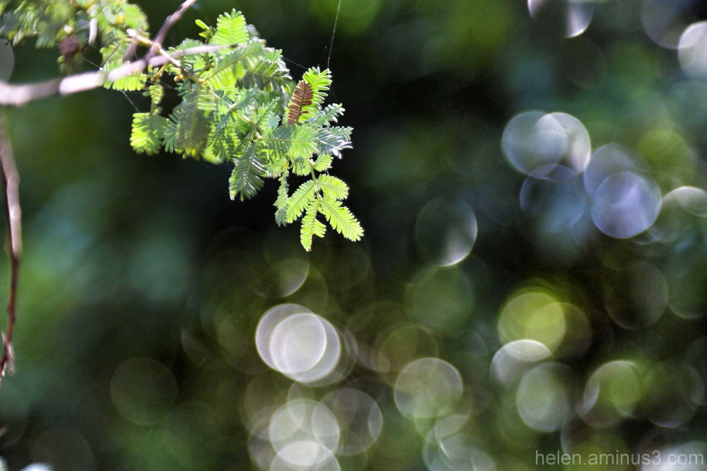 Bokeh afternoon