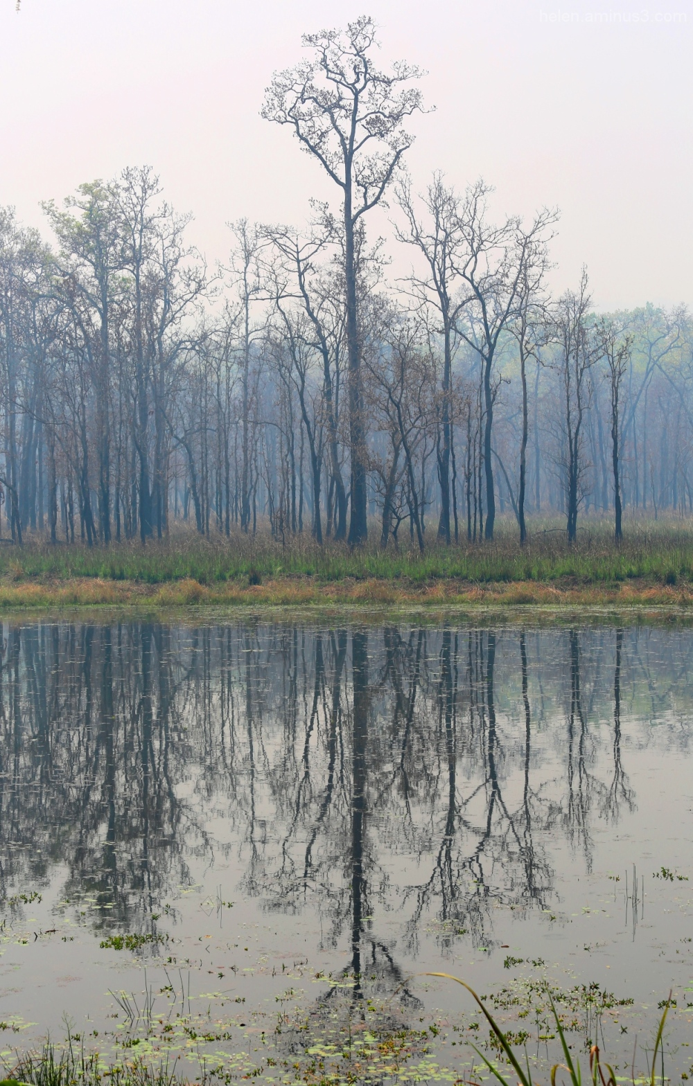 Reflections of Chitwan