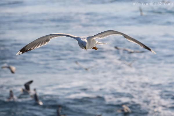 Sea birds 1