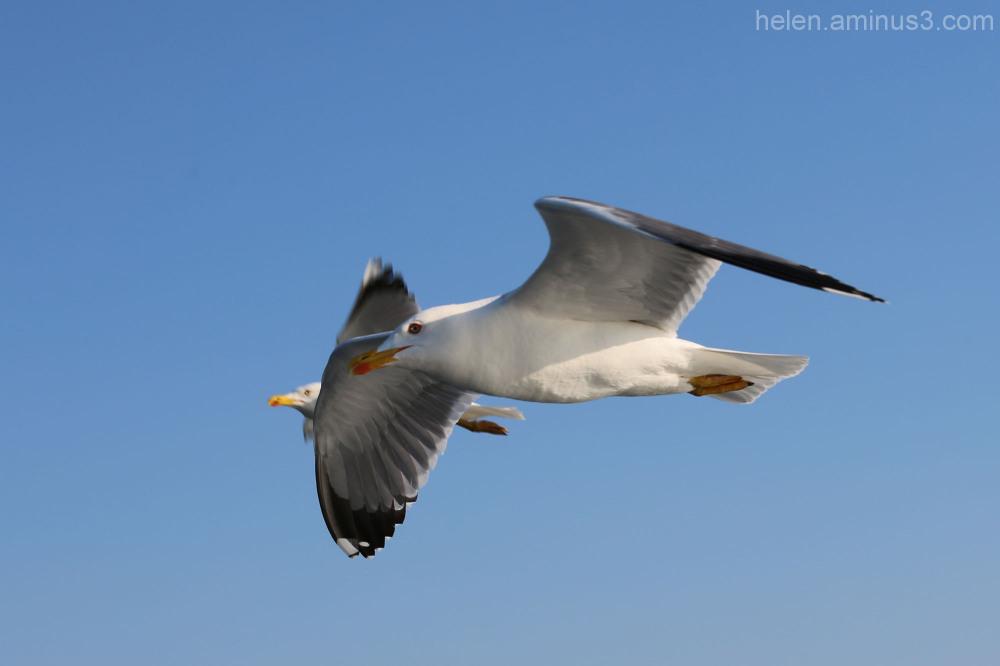 Sea birds 6
