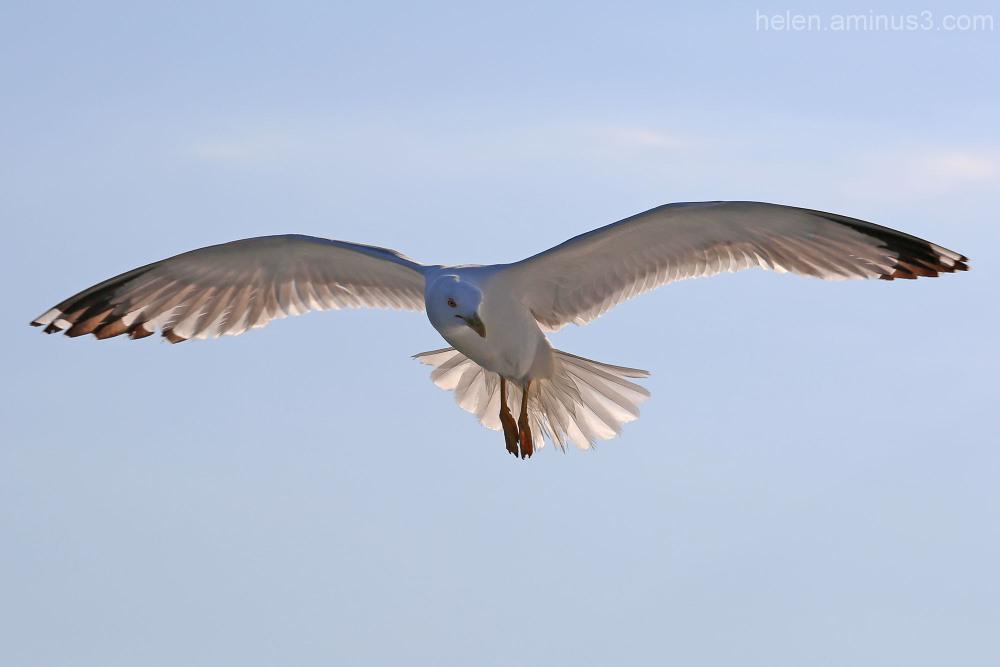 Sea birds 9