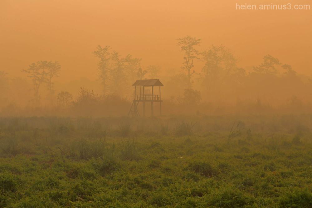 Chitwan safari - 1