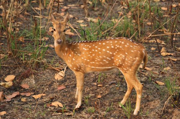 Chitwan safari - 3