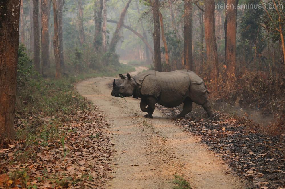 Chitwan safari - 4