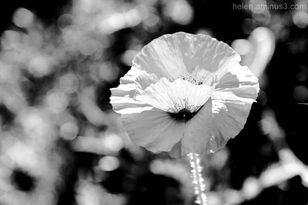 As Spring drifts towards summer ... II