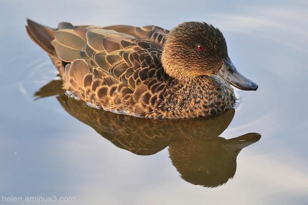Photo Essay: Ducks on the pond