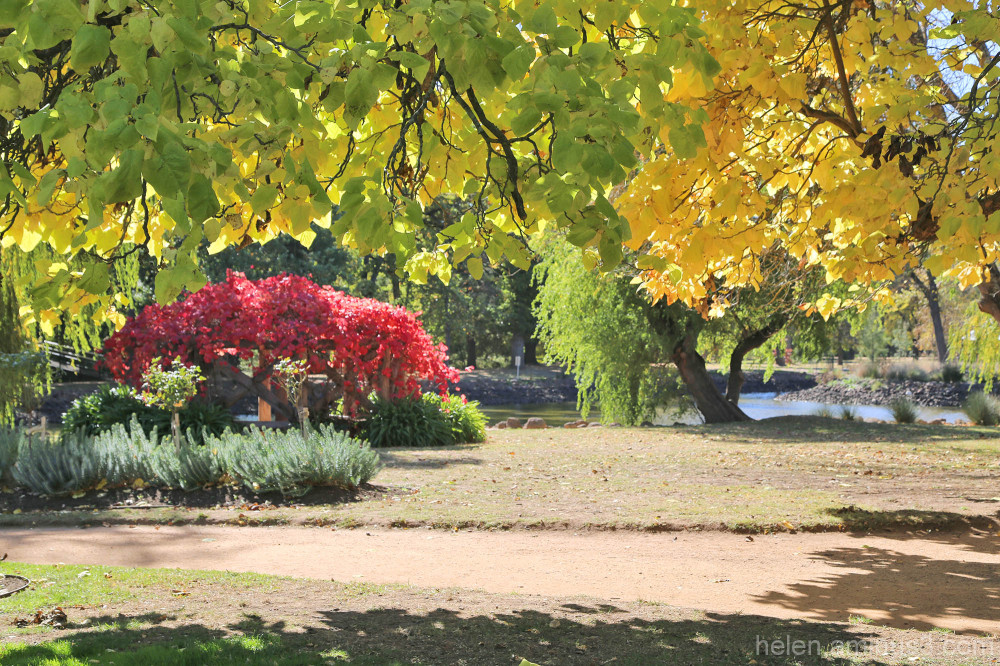 Autumn comes to Castlemaine