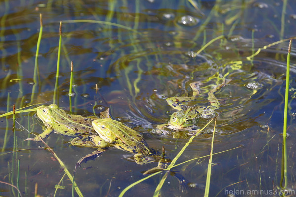 Frog swimming class - group