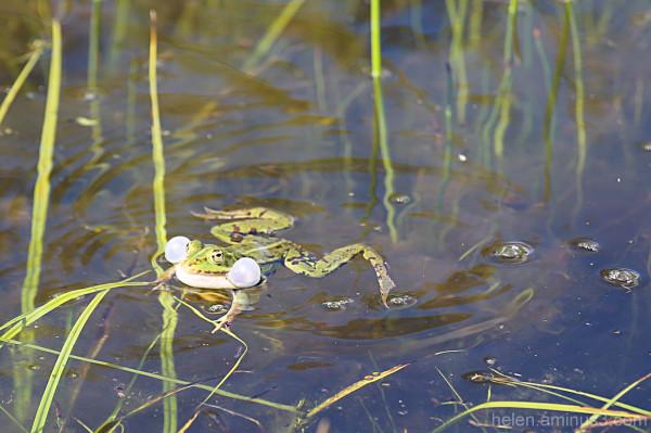 Frog swimming class - floaties for beginners