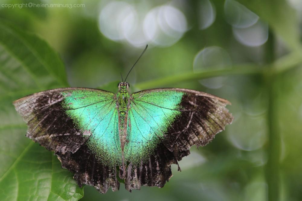 Back to butterflies - 1