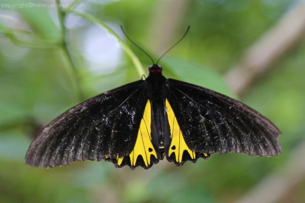 Back to butterflies - 2