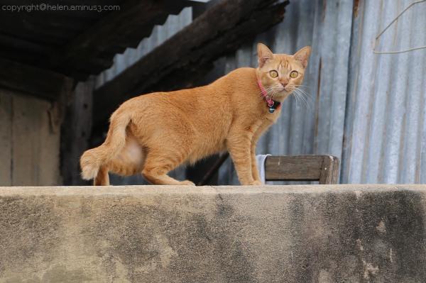 Klong cat