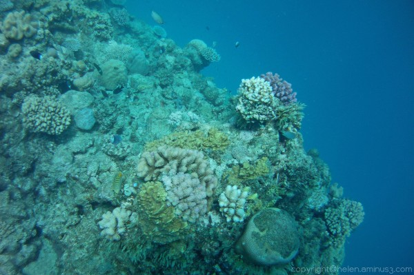 The Great Barrier Reef 4