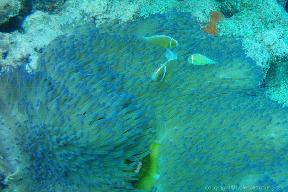The Great Barrier Reef 6
