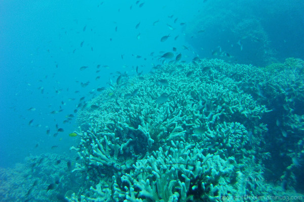 The Great Barrier Reef 5
