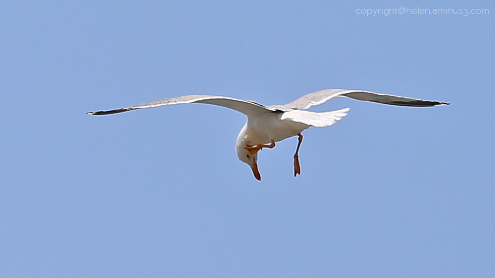 Acrobatic itch