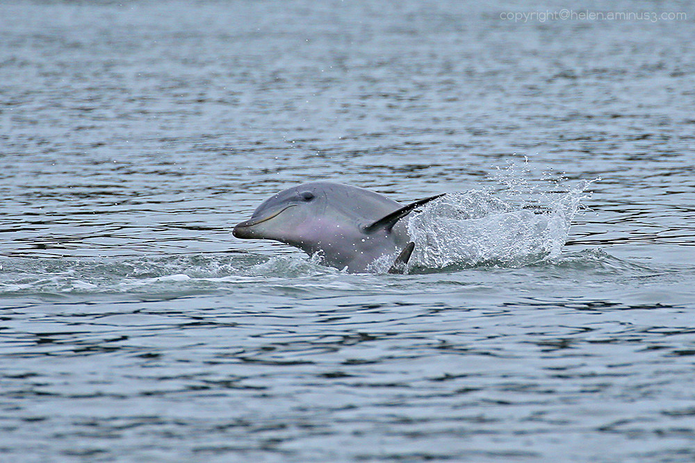 Dolphin in the bay