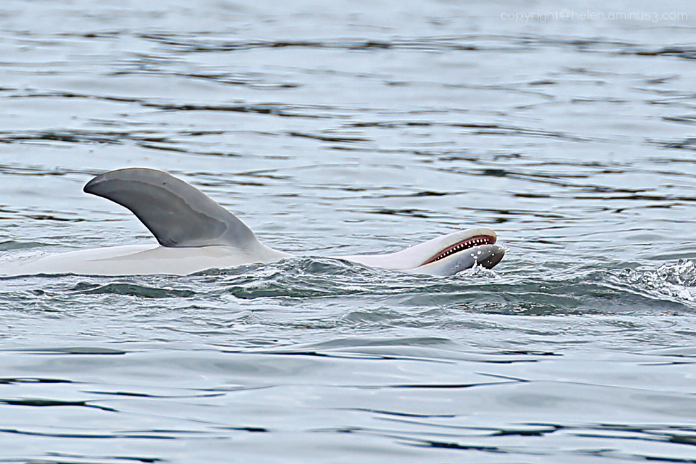 Dolphin in the bay 3