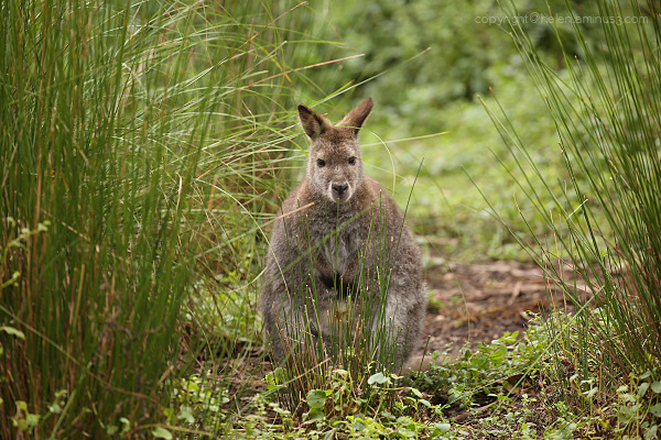 Wildlife spotting: 6
