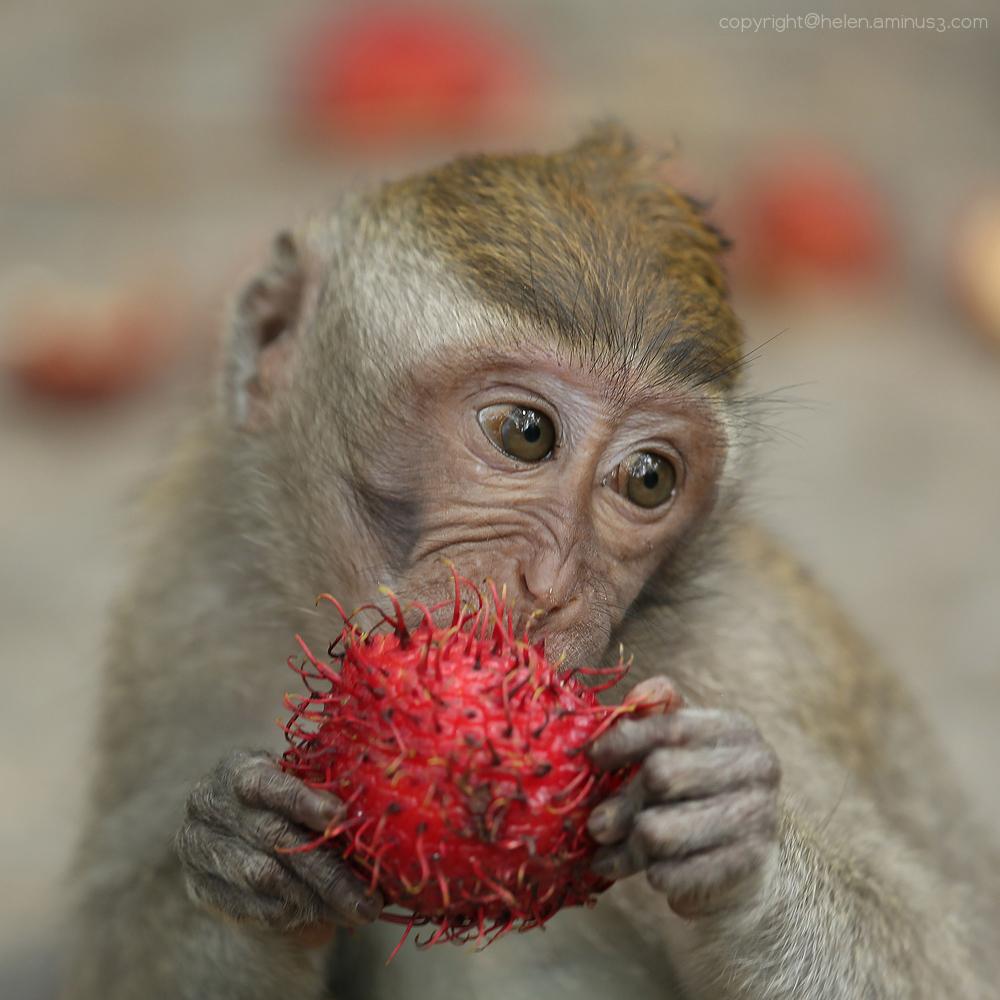 Rambutan delight
