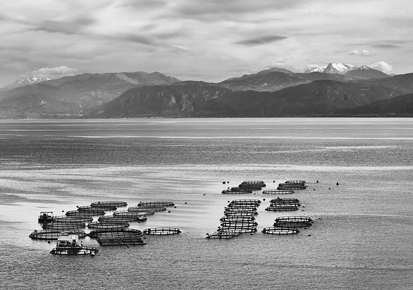 Fish farm: Greece