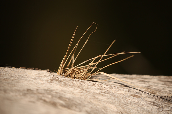 Grass in wood
