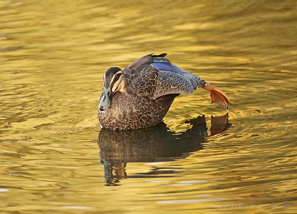 Pilates on golden pond
