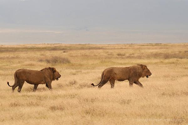 Serengeti: 2