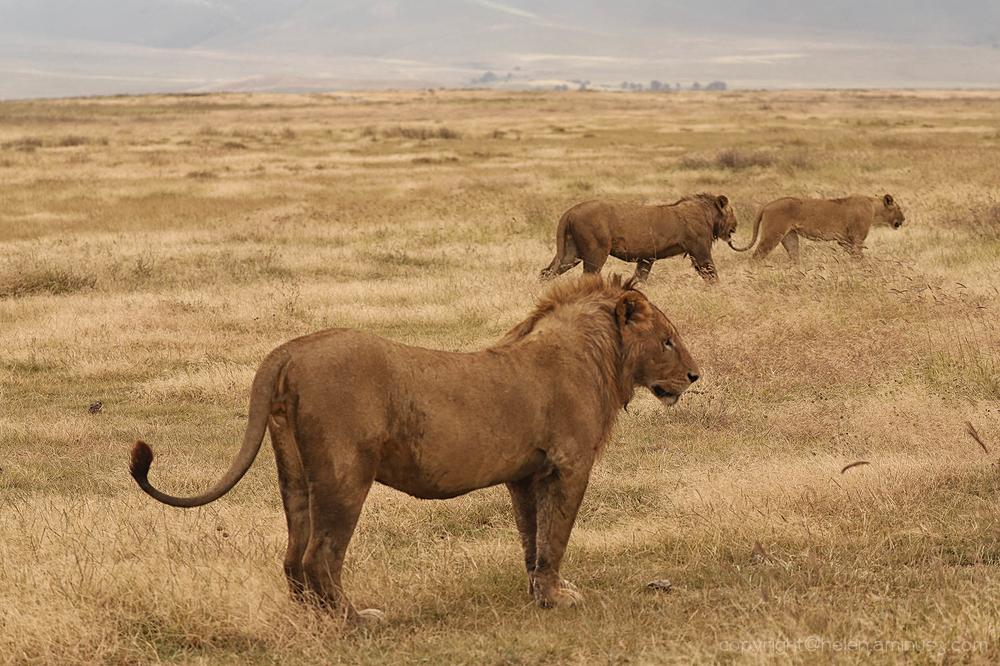 Serengeti: 5