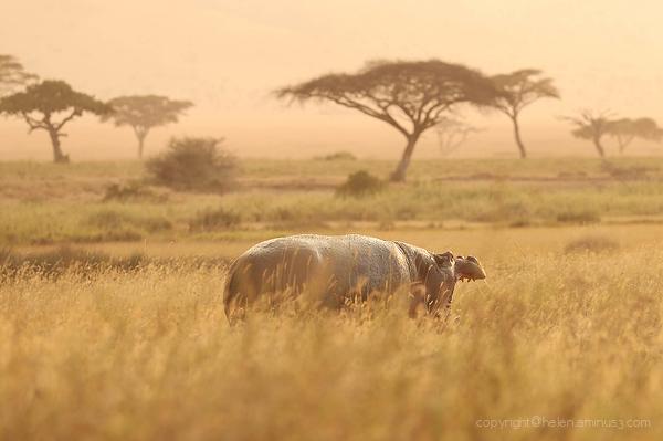 Serengeti: 6