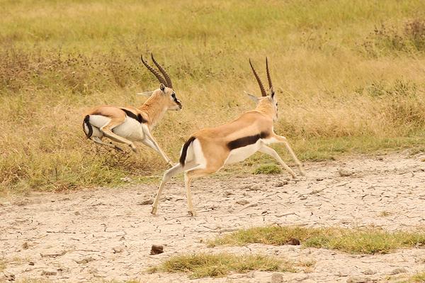 Serengeti: 11
