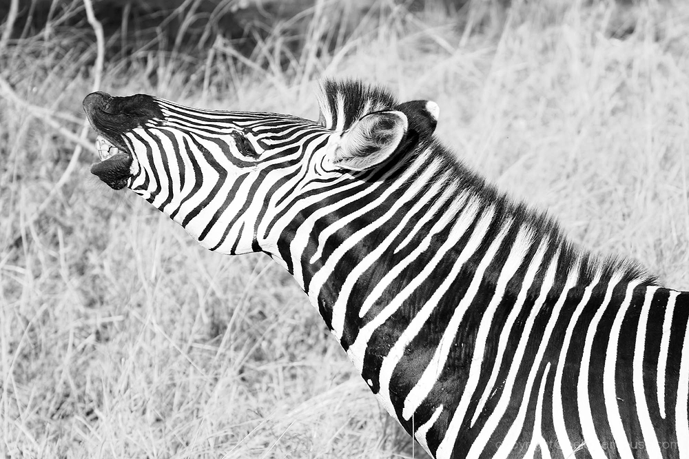 Serengeti: 12