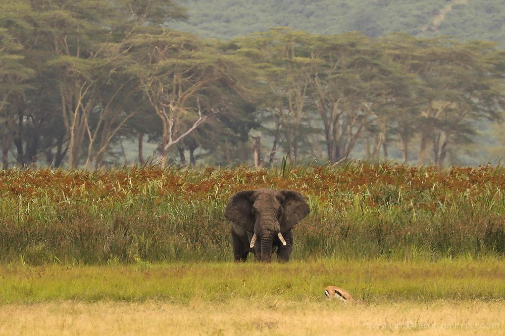 Serengeti: 13