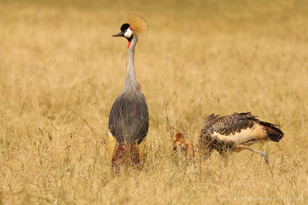 Serengeti: 14
