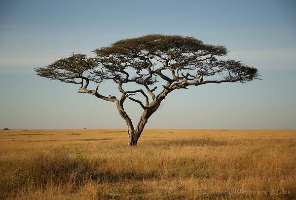 Serengeti: 15