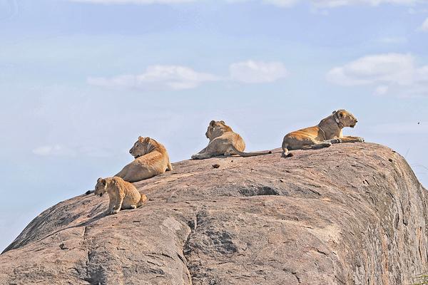 Serengeti: 16